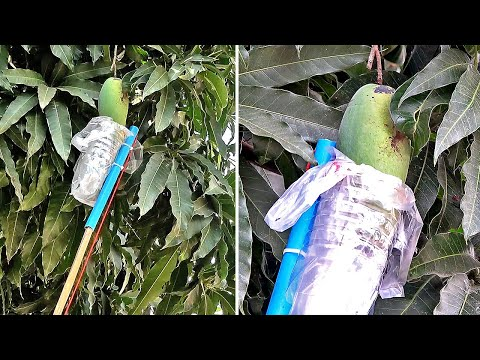 Fruit Wrapper Device From Plastic Bottle | Do it yourself - วันที่ 31 Mar 2019