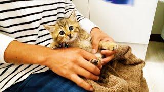 保護猫をお風呂に入れてあげた