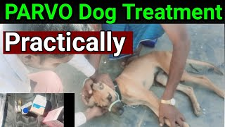 PARVO Dog Disease Treatment in hindi dog virus parvo how to cure Ramawat dog care