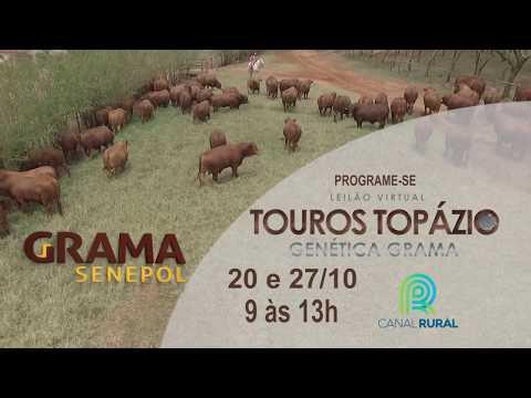 LEILÃO TOUROS TOPÁZIO GRAMA SENEPOL & CONVIDADOS Teaser 1