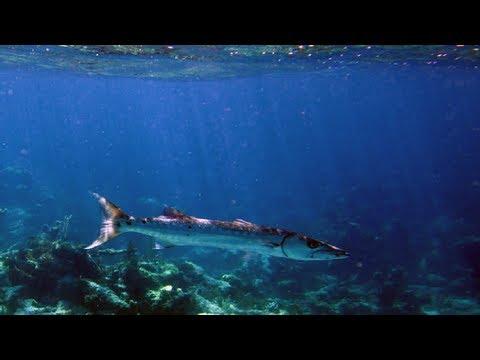 GoPro Marine Biology Bahamas (HD)
