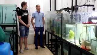 видео Морской аквариум в вопросах и ответах