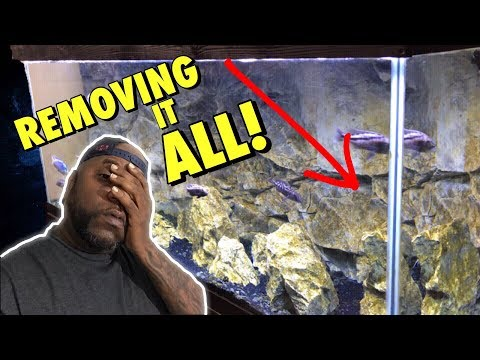 Removing BROWN ALGAE From AQUARIUM