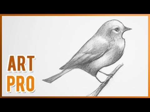 how-to-draw-a-bird-step-by-step