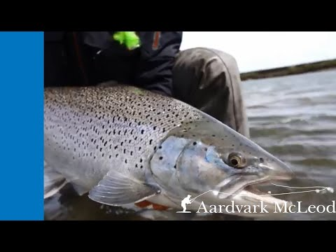 Fly Fishing For Sea Trout From Villa Maria Lodge In Argentina 2019