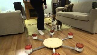 Mould Dog Daily Training, Real Home Inspections Ontario