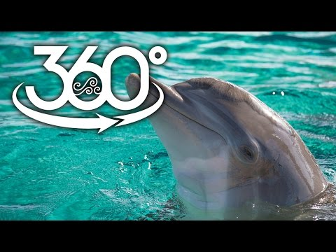 360-Degree Dolphin Fun at Clearwater Marine Aquarium