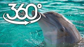 360 degree dolphin fun at clearwater marine aquarium