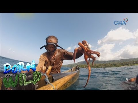 Born to Be Wild: Doc Nielsen catches Calayan octopus with the locals