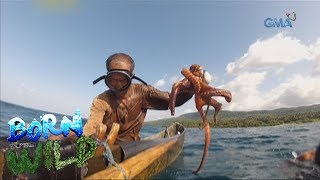 Born to Be Wild: Doc Nielsen catches Calayan octopus with th...