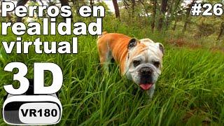 Perros en realidad virtual   Episodio #26