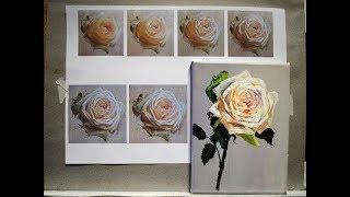 Белая роза поэтапно маслом на холсте. Уроки живописи для начинающих спб