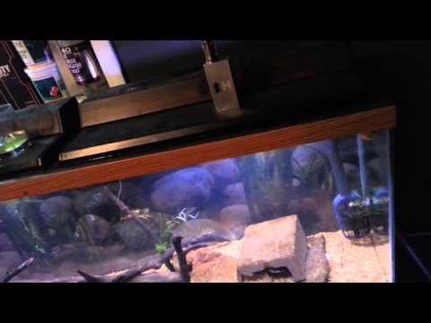 PA native aquarium