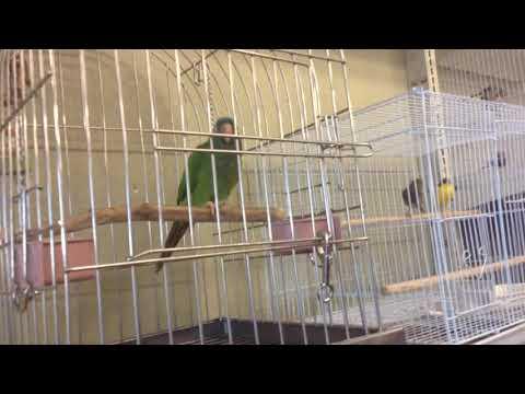Baixar Birds Planet Pet Store - Download Birds Planet Pet