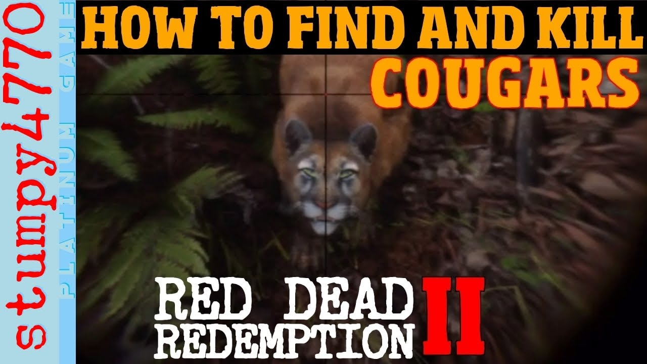 best place to find cougars