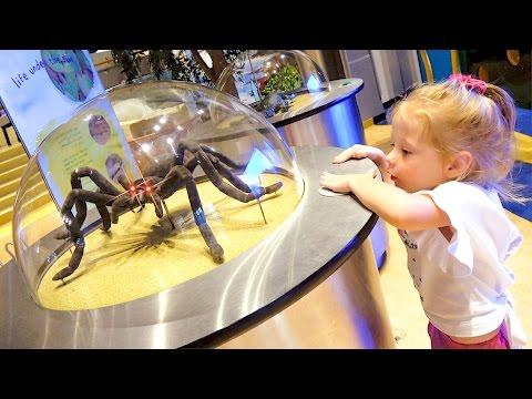 Детский музей науки Развлечения для детей Развивающее видео Children's Museum Kids Pretend Play