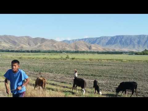 transAsia40-D61 Andijan》Osh @Kyrgyzstan