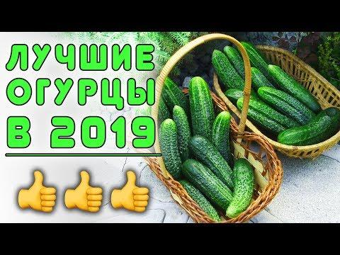ЛУЧШИЕ ОГУРЦЫ 2019!