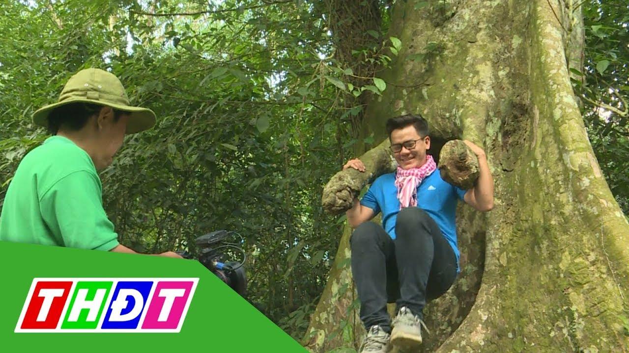 Trải nghiệm và khám phá rừng Cúc Phương | THDT