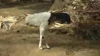 Duniya Me Kitna Gam Hai Mera Gamexelent Videos
