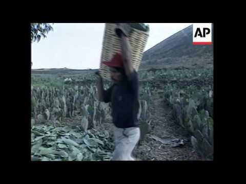 MEXICO: PLANS TO MARKET EDIBLE CACTUS PLANT