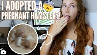 I ADOPTED A PREGNANT HAMSTER?! 😱 Meet Honey & the babies!