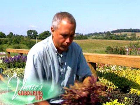 Sweet Potato Vine Container Garden Ideas