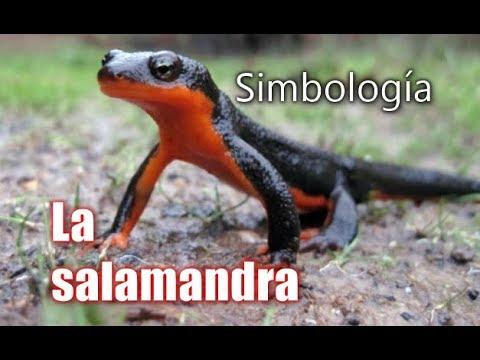 La salamandra. Supo guardarse de todos los ataques de traici�n, de injusticia, de falta de honradez,