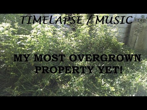 Mowing the Most Overgrown Lawn in My Career - Time Lapse with Music
