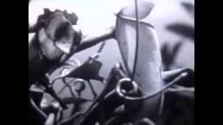 видео Острова Океании, вулканические, материковые и коралловые