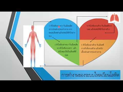 25/05/63สุขศึกษา ป.6 เรื่อง ระบบไหลเวียนโลหิต