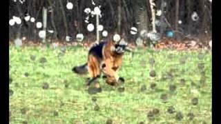 Casting Royal Canin by Lilystrike.avi
