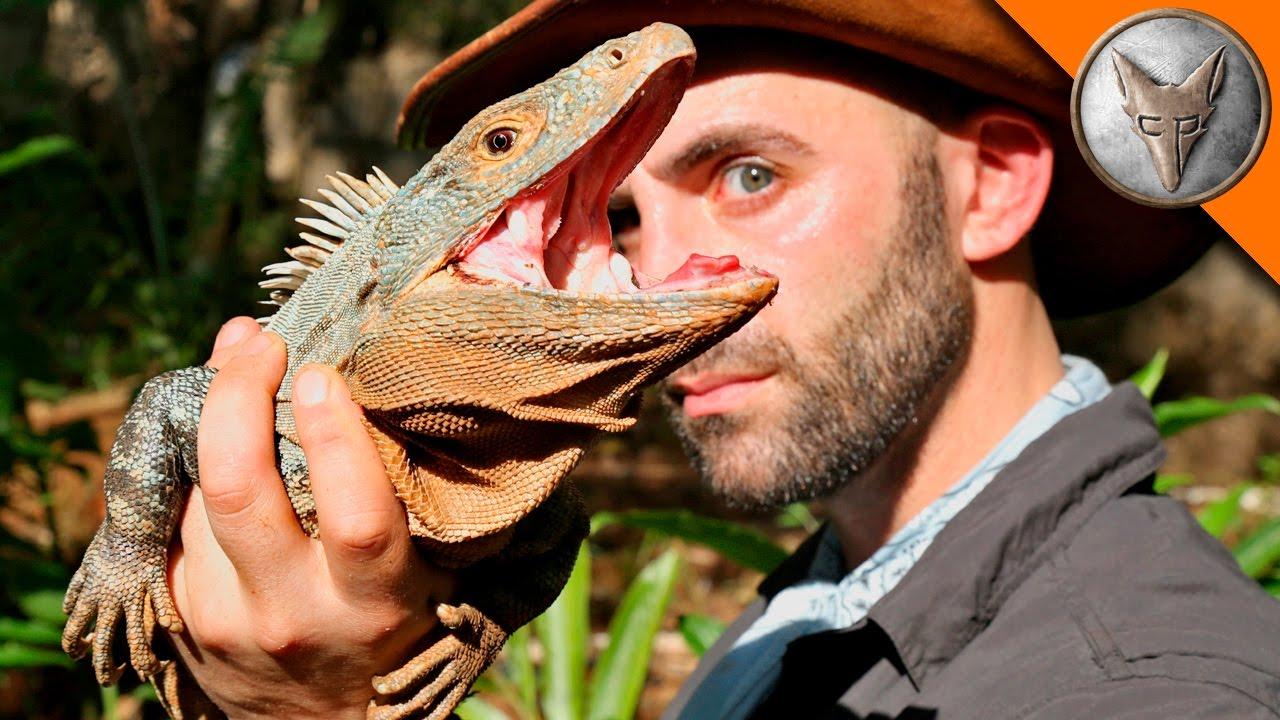 jurassic-lizard