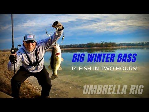 Umbrella Rig For BIG Winter Bass‼️