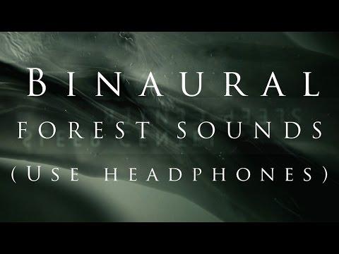 SLEEP CENTER : Forest Sounds 1 Hour Binaural (3D AUDIO Use Headphones) #2