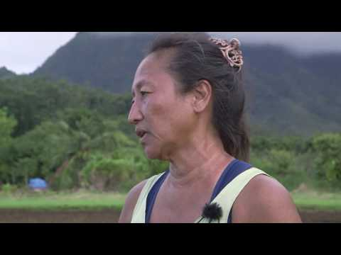 Organic Taro Farming with Chris Kobayashi & Demetri Rivera