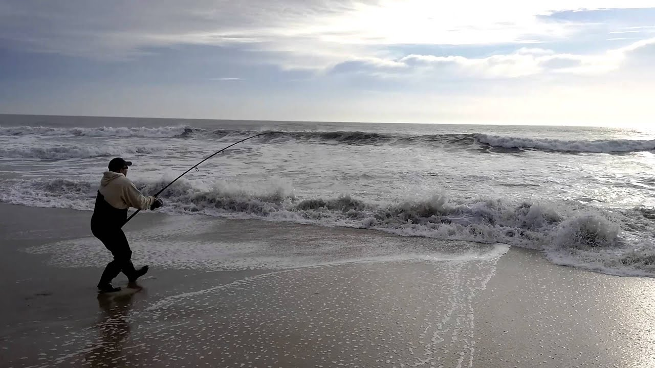 Striped bass lbi surf fish classic nov 28th 2015 youtube for Lbi surf fishing report