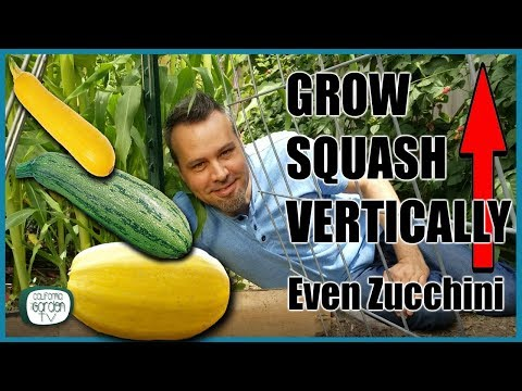 grow-squash-vertically---even-zucchini-//-complete-guide