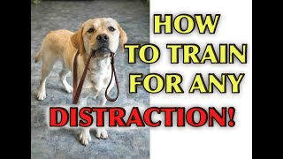 Dog Training Tutorial: Loose Leash Walking With Distractions!