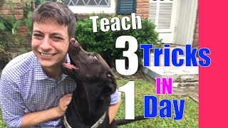 Teach Your Dog 3 Tricks In 1 Day! Speak, Shake And