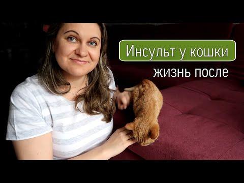 Инсульт у кошки: жизнь после/ Реабилитация после инсульта/ Наш опыт