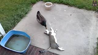 Cats vs Wild Animals! (A Compilation)
