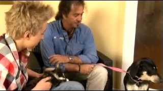 Dog Training - Introduction To Cats - All About Animals Tv Show