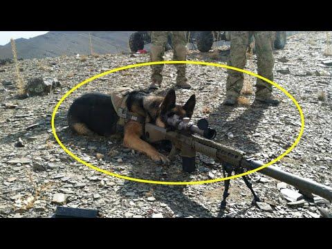 मिलिट्री डॉग ट्रेनिंग के बाद खूंखार कैसे बनते हैं Military Dog Training