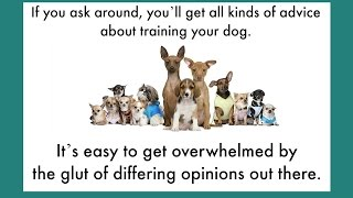 Dog Behavior And Training Issues | Dog Behavior Training - How Should You Do It?