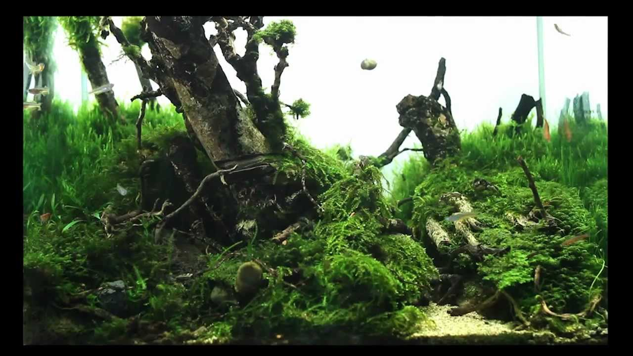 SuperWen's 2012 Aquascape - Mononoke Forest - YouTube