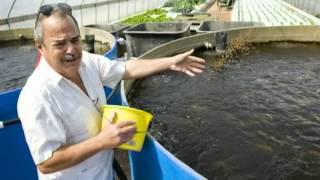 aquaponic gardening | aquaponic tank | aquaponic farm