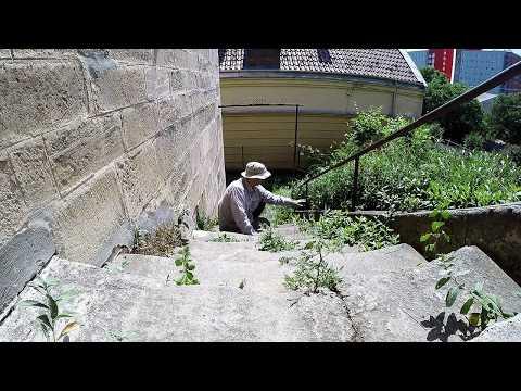 Az óriás tőrösdarazsak nem veszélyesek / Mammoth Wasp not dangerous, Budapest (2018.05.13.)