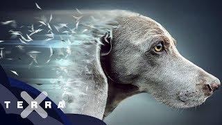 Die Geschichte des Hundes