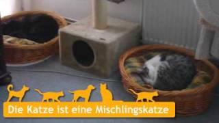Mischlingskatzen In Seelze